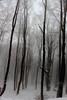Forêt de glace (ZUHMHA) Tags: bulgarie bulgaria winter hiver ice gel tronc tempête fog brume brouillard buzludja wood forest tree snow neige arbre forêt bois totalphoto