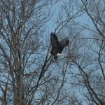 Eagle Landing thumbnail