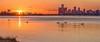 Swan River (Wes Iversen) Tags: bellislepark belleisle detroit detroitriver michigan nikkor80400mm architecture birds bridges buildings rivers skylines swans water wildlife