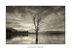 Large leafless tree in lake with birds nest (sugarbellaleah) Tags: cool hues dusk tree lake serene sublte colour clouds light evening silhiouettes prettyamazing wonderful birdnest tranquility landscape rural scenic australia water mountains nature weather environment pristine countryside nsw moody