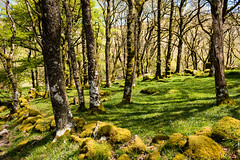 Dartmoor woodland