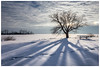 """Footprints in the snow"" (etzel_noble) Tags: backlit frozenlakeerie canonphotography canon70300mm canon6d wintertrees trees naturephotography nature michiganwinter winterphotography winter snow"