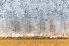 Winter Layers (Patti Deters) Tags: winter cold hoarfrost frost trees marsh rice reeds grass scenic frosty landscape nature outdoors shore shoreline marshy grasses tan beige