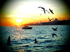 P1070275 (zenginuyak) Tags: city cityview bosphorus istanbul m43 boat sailboat sea bluemosque seagull sunset