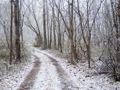 snow_12-2021