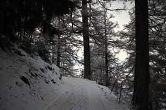 de retour sur le Mont Chemin (bulbocode909) Tags: valais suisse montchemin chezlarze montagnes nature forêts arbres mélèzes chemins neige automne brume troncs chemindessus explore