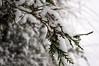 Snow 2017 (tim ellis) Tags: snow suttonpark tree branch birmingham uk
