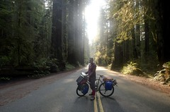 Me and yonder loving the Redwoods! (speed6ump) Tags: pan american highway 101 bicycle tour touring redwood state national park california