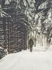 Lost in the woods... (davYd&s4rah) Tags: snow winter germany deutschland bavaria bayern chiemgau schleching breitenstein wuhrsteinalm alm cabin wood path snowisfalling winterwonderland wonderland cold gloves yellowgloves contrast bokeh silence weihnachten christmas olympus epl7 m45mm f18 olympusm45mmf18 iloveolympus