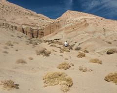 022 Emerging From The Canyon (saschmitz_earthlink_net) Tags: 2017 california orienteering redrockcanyon statepark laoc losangelesorienteeringclub mojavedesert desert kerncounty elpasorange