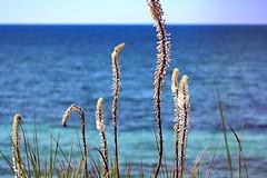 Ocean breeze (viviandemotte) Tags: memories photography canon eos1300d dreaming landscape relaxation lastdaysofsummer sunshine breeze ocean white blue colours lovely vacation summer greece preveza
