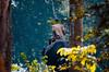 யானை பாகன் | Mahout (Kals Pics) Tags: nanjarayapatna forest wildlife trees dense greenery woods westernghats kaveri river banks cwc chennaiweekendclickers roi rootsofindia life travel people tourism incredibleindia madikeri kodagu coorg mahout elephant training black big giant skin texture trainer karnataka india kudagu animalcare lightandlife work elephantcamp lightandshadow elephantride leaves plants vegetation greenfields dubare hillstation mountains cauvery kalspics