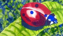 Joaninha/Bug, by Mariana - DSC01005 (Dona Minúcia) Tags: art painting watercolor study paper animal insect leaf ladybug nature arte pintura aquarela joaninha folha natureza inseto