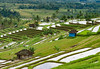 Valley View (monojussi) Tags: bali jatiluwih indonesia subak terraces