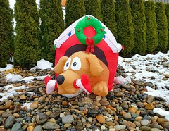Christmas Dog House (walneylad) Tags: christmas dog house doghouse decoration novelty holiday seasonal fun humour humor norgate northvancouver britishcolumbia canada blowup inflatable plastic colourful red white green
