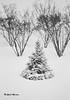 Géométrie hivernale... (Argentique) / Winter's geometry... (Film) (Pentax_clic) Tags: konica c35 rollei retro 400s hc110b 8 minutes argentique film nb bw decembre 2017 hiver sapin robert warren vaudreuil quebec