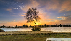Choppy Water (nicklucas2) Tags: landscape newforest andrewsmare sunrise water pond tree cloud