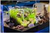 M9-1049777 (Giacomo Pagani) Tags: giacomo pagani giacomopagani leica camera ag m9 full frame ccd rangefinder telemetro 2017 summicron 90 mm f2 leitz vintage acquarishop acquari acquario acquarium aquascaping