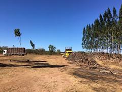 "Eucalyptus loading GWD Forestry farms Brazil <a style=""margin-left:10px; font-size:0.8em;"" href=""http://www.flickr.com/photos/47172958@N02/39403785382/"" target=""_blank"">@flickr</a>"