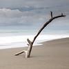 Driftwood (AEChown) Tags: driftwood tree beach minimalism sea seascape sand costarica pacific thepacific ocean