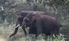 Asian elephant (praveen.ap) Tags: tamilnadu asian elephant asianelephant asiaticelephant germalam satyamangalam satyamangalamtigerreserve safari family kid pair str elephantfamily