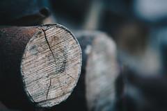 Dry Log (Elowi) Tags: wood holz log dry trocken leben life liferings lebensringe scheit holzscheit woodlog wallpaper hintergrund colors farben bokeh sharpness schärfe sony sonyalpha alpha6000 alpha makro macro sel90m28g