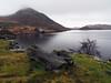 Llynnau Cregennen (Argentem) Tags: wales llynnaucregennen snowdonia lake treetrunk hills mist