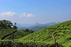 IMG_20171218_213004_004 (niriharikumar) Tags: tea plantation munnar kerala india