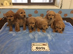 Roxie Girls pic 4 12-10