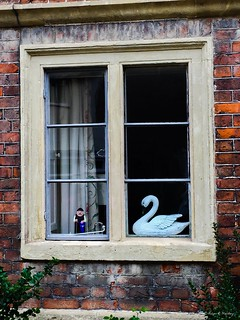 Swan....Merry Christmas, Everyone