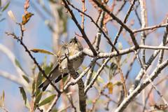 DSC_1050.jpg Yellow-rumped Warbler, Twin Lakes (ldjaffe) Tags: twinlakes