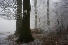 Rhymes,TheySprangInMe (BphotoR) Tags: rime frost reif wald woods forest fog bphotor germany december