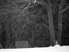 snowy & cold (4) (Ange 29) Tags: snow cold trees compost bos bw olympus omd em1 mkii 35100mm zd king township canada