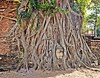 Buddha Head Entwined (diamonds_in_the_soles_of_her_shoes) Tags: tree roots face head buddha ayutthaya shrine teampilipinas