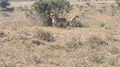 2017-12-28 14.55.53 (dcwpugh) Tags: travel nairobi kenya safari nairobinationalpark