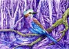 Lilac-Breasted Roller (molossus, who says Life Imitates Doodles) Tags: lilacbreastedroller bird forest nature trees