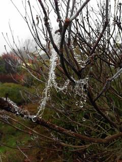 When Spider Webs Turn into Diamonds
