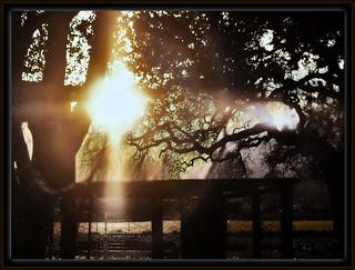 sunset in oak grove