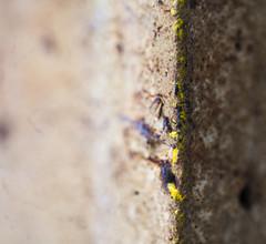 paint on concrete (n.a.) Tags: yellow beige concrete paint corner bokeh blur close closeup macro
