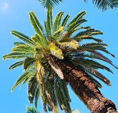 Key West (Florida) Trip 2016 0618Ri (edgarandron - Busy!) Tags: florida keys floridakeys keywest resort resorts casamarina