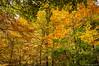 Salpicadura de color (SantiMB.Photos) Tags: 2blog 2tumblr 2ig fotohiking urederra nacederodelurederra urbasa río river otoño autumn bosque forest geo:lat=4280029882 geo:lon=213136265 geotagged baquedano navarra españa esp