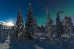 He went that way (tomi.a) Tags: finland kuusamo ruka suomi northernlights auroraborealis aurora trees forest snow moon clouds sky landscape nightscape snowscape white flickr d850 stars nature dark cold freezing winter travel