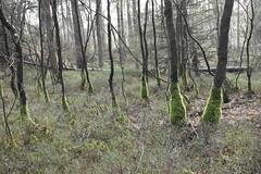 "Forest ""De Veluwe"" (Lars Loomans) Tags: trees bomen forest bos veluwe nederland the netherlands"