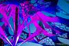 Transform2017_01456 (Maverick L.) Tags: 3duby awf acidwildflower agni alyosha avara biopolar blisargondemogorgon bolesov chicko chickomrteacher chors circusbent cosmicdance cummis djrifs djelemental elementalcrew ellisdee evocatone festival2017 fisheye floatingplanet fluoelf forestelement galacticvision heartbeat heartcoreorchestra incredibletide jujuplanetdub magnetique marschi maryosha melt mimotv moogly nadamau nokoklaus openair perun portalprotection psychedelia psytori psytrance rodikron ryesmugglers sagus93 shumiak spiritualmode stefantorto tamal terrahertz tetris timduster timeflux transformfestival vois yawkyawk zarrax zencore bolešov trenčianskykraj slovakia sk