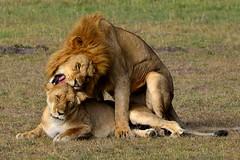 DDR_3589 (Santiago Sanz Romero) Tags: kenya wildlife animales ngc