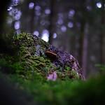 Mushrooms thumbnail