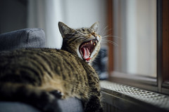 yeah... weekend! (freiraum7) Tags: sony a7rii i zeiss batis 85mm f18