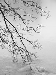 Sous emprise **--- ° (Titole) Tags: branches ice lake blackandwhite bw nb noiretblanc titole nicolefaton friendlychallenges thechallengefactory