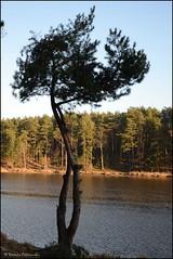 DSC_6969 (facebook.com/DorotaOstrowskaFoto) Tags: rejów skarżyskokamienna zalew zalewrejowski plaża drzewa woda świętokrzyskie poland spacer