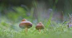 Awakening (Rafael Díez) Tags: españa larioja tobia macro naturaleza otoño rafaeldíez setas bosque hayedo verde